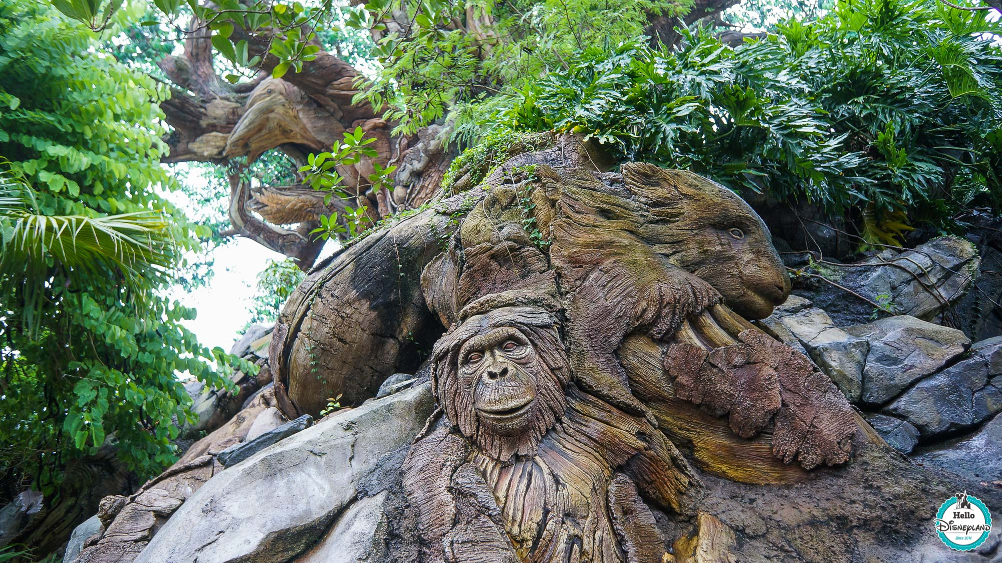 Animal Kingdom - Walt Disney World